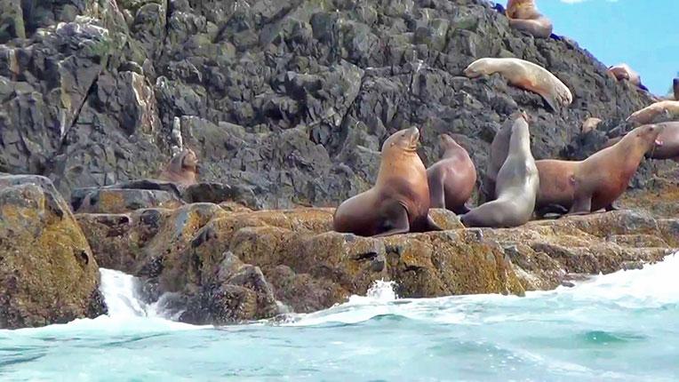 wild-sealife